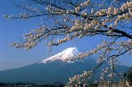 Mt Fuji with Sakura